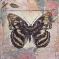 03 butterflies