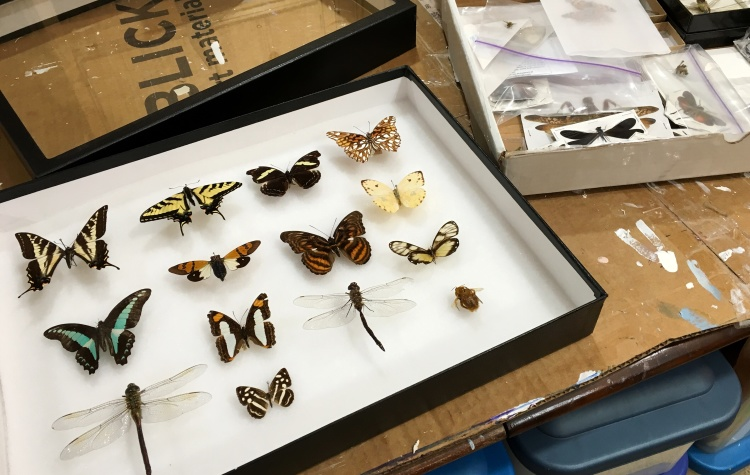 insect collection in the art studio of Judith Monroe