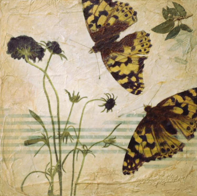 butterflies, butterfly, floral,